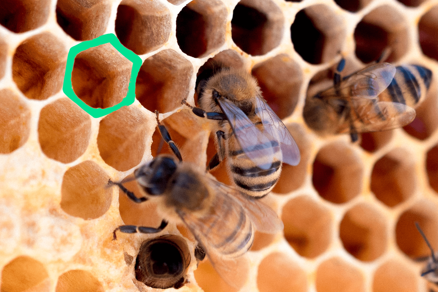 Like the construction of this honeycomb, custom software development requires efficiency